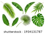 tropical different type exotic... | Shutterstock .eps vector #1934131787