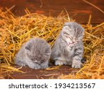 Kittens Wash While Lying In The ...
