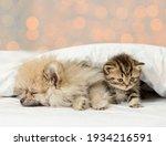 Pomeranian spitz puppy sleep...