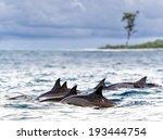 Pod of wild  spinner dolphins (Stenella longirostris) in shallow bays near Bird Island, Seychelles