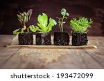 Vegetable Seedlings  On Rustic...