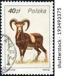 "Small photo of POLAND - CIRCA 1986: A Stamp printed in POLAND shows image of a Argali with the description ""Ovis ammon"" from the series ""Wildlife"" ;, circa 1986"