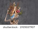 Torso  Skeletal Bones  And...