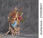 Human Skeleton On A Gray...