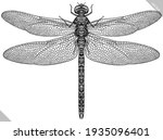 Engrave Isolated Dragonfly Hand ...