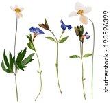 Set Of Wild Flowers Pressed ...