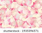 Pink Blossom Nature. Black...