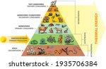 vector illustration of food... | Shutterstock .eps vector #1935706384