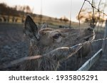 Detail of the cute face of female deer in a deer-park behind a fence. People and animals. Wildlife and nature in the city.