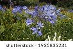 Beautiful  Spring Blue  Purple...