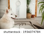 A Beautiful Dog Of The White...