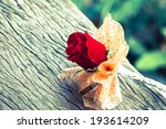 red rose flower with grunge... | Shutterstock . vector #193614209