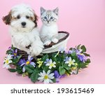 Stock photo puppy and kitten sitting in a basket with flowers around them with copy space 193615469