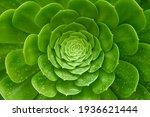 Close Up Succulents Plants...