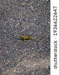 Differential Grasshopper...