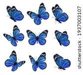 colored butterflies. flying... | Shutterstock . vector #1937003107