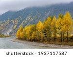 Autumn Scenery In Qinghai...