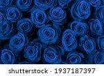 Beautiful Blue Roses  Floral...