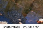 A Bunch Of Frog Eggs In A Pond. ...