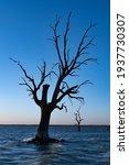Blue Hour  Large Dead Tree...