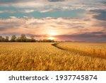 Golden wheat field on the...