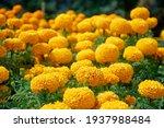 Bouquet Of Beautiful Yellow...