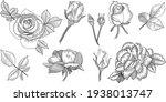 rose flower outline vector....   Shutterstock .eps vector #1938013747