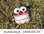 Chattering Teeth In A Patch Of...
