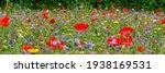 Multicolored Flowering Summer...