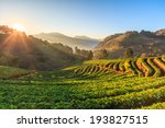 strawberry garden at doi ang... | Shutterstock . vector #193827515