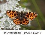 Beautiful Reddish Butterfly ...