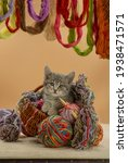 Kitten Playing With A Wool...