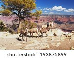 view of bighorns in grand...