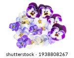 Pansy Flower    Flower...