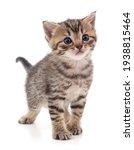 One Small Striped Kitten...