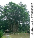Banyan Tree In Botanical Garden ...