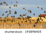 A Flock Of Fieldfares Takes To...