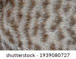 Focus Of Cat Hairs   Cat Fur...