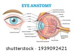 eye anatomy with labeled...   Shutterstock .eps vector #1939092421