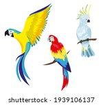 A Set Of Tropical Parrots....