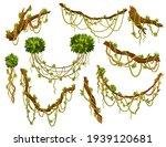 liana or jungle plant or vine...   Shutterstock . vector #1939120681