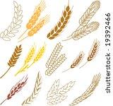 wheat ears | Shutterstock .eps vector #19392466