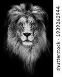 Portrait Of A Beautiful Lion ...