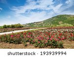 Stock photo rose garden 193939994