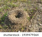 Ant Hill In The Meadow
