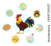 vector illustration of farm... | Shutterstock .eps vector #1939719337