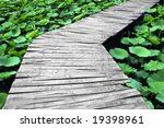 Wooden Trestle Among The Lotus...