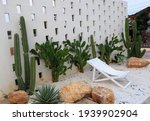 The Cactus Garden Has A White...