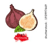 figs  vector hand drawing  | Shutterstock .eps vector #193997669