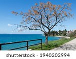 Adriatic Sea Shore And...